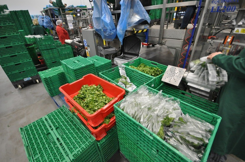 Image of herbs being processed and packaged.