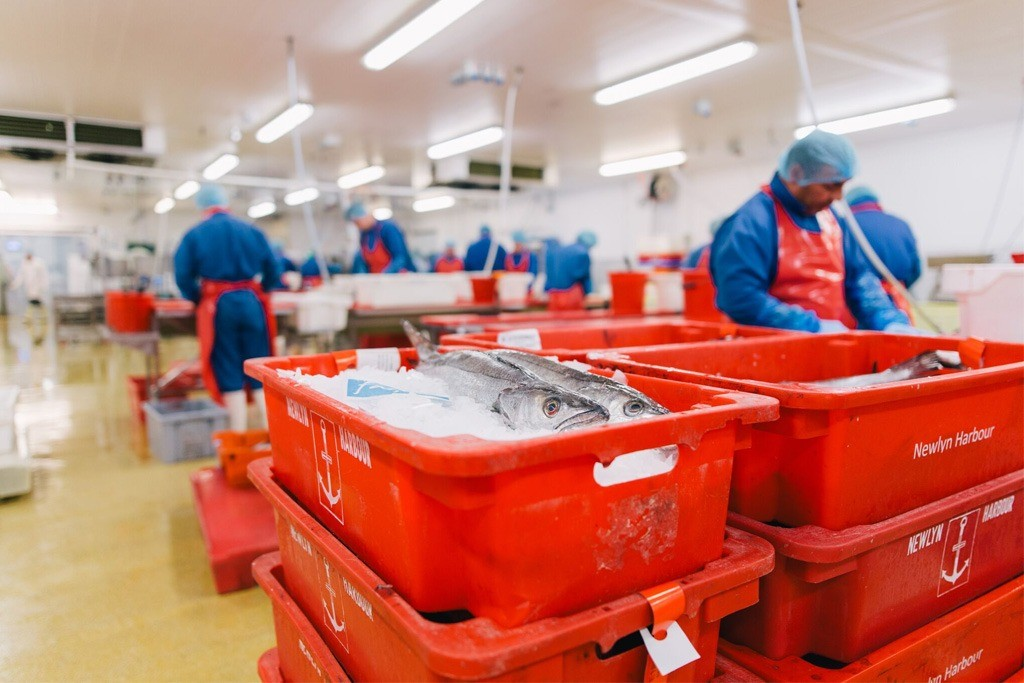 Image of workers processing fish inside Falfish factory.