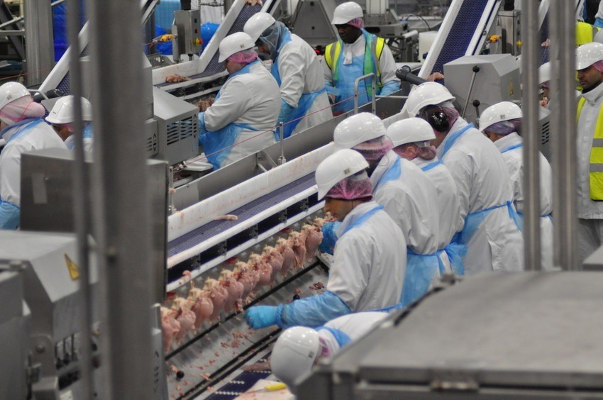 Image of workers processing chickens.