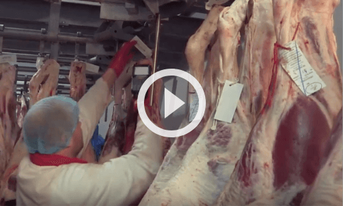 How can catering butchers effectively manage stock intake?